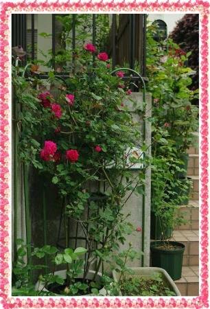 rose506 156