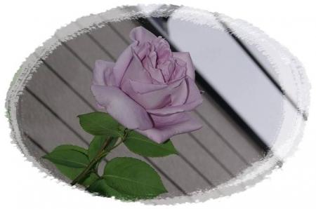 rose508 046