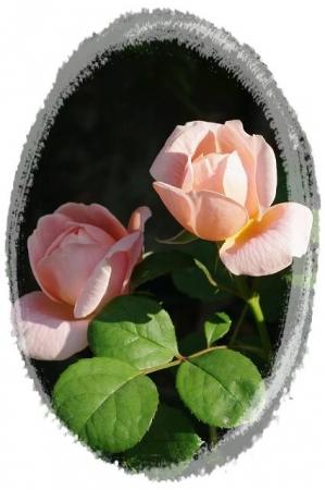 rose5010 007