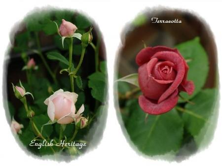 rose514 004-horz