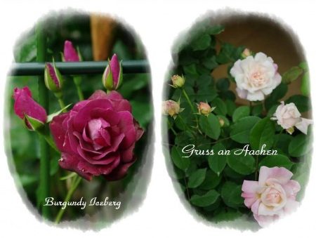 rose514 013-horz