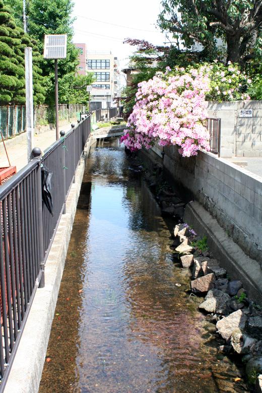 140515_7川と花
