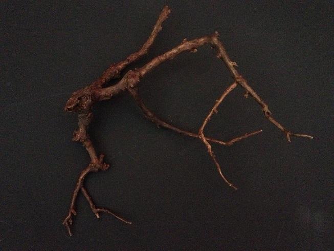 WASABI枝流木
