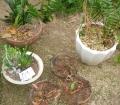 室内植木鉢