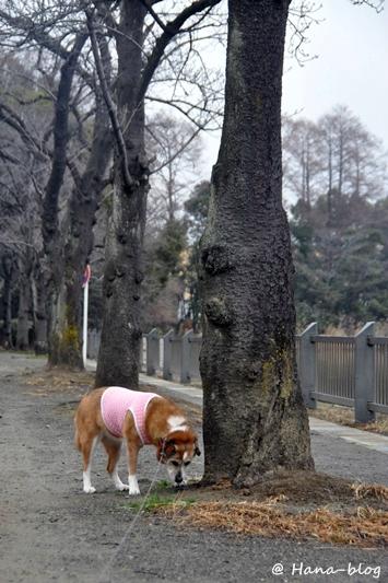 浮間公園 022