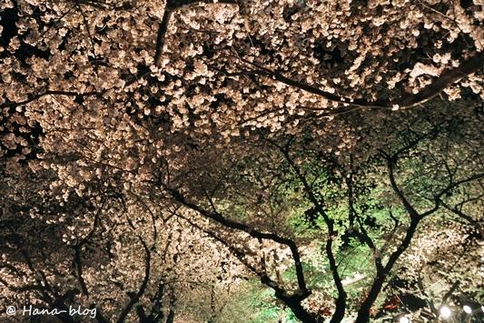 としまえん夜桜 079