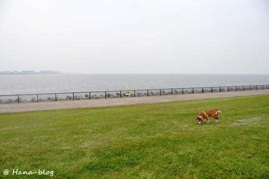 若洲海浜公園 065