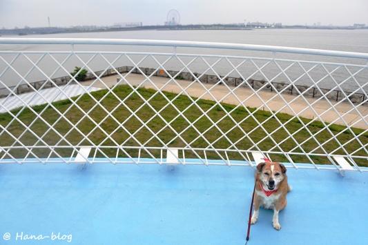 若洲海浜公園 118