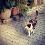 cat201402.jpg