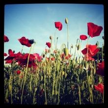 flowers_0427.jpg