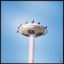 pigeons_0427.jpg