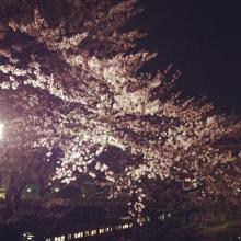 sakurasaku0331_01.jpg