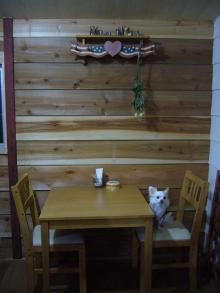 tea drop-犬席