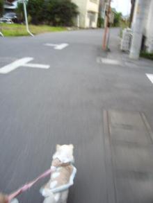 tea drop-散歩