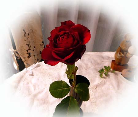 薔薇のその後