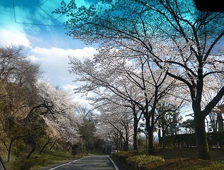 箕郷公園 2