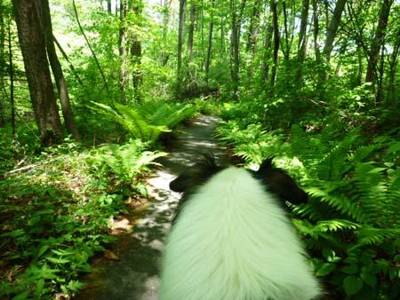 森の道を行く・・・