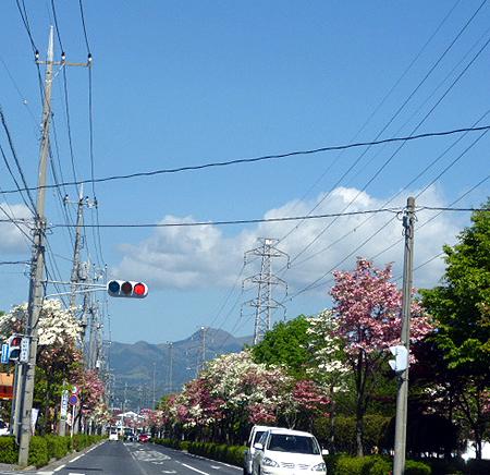 花水木通りから榛名山