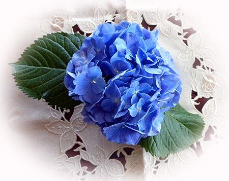 2 紫陽花