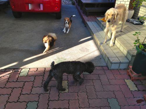 ルーク、レオ、マー、ドリー