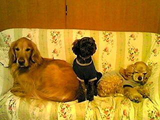 ソファーにて3匹