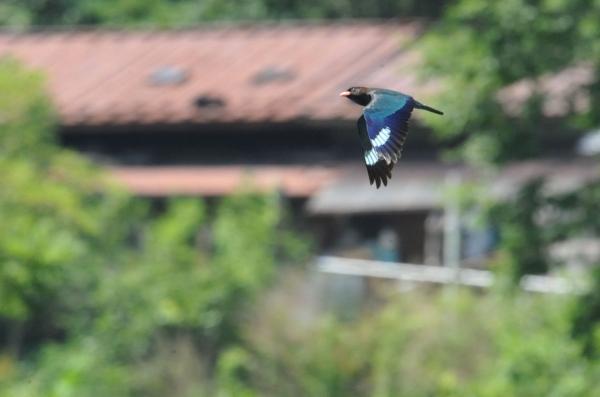 3天竜川上を飛ぶ