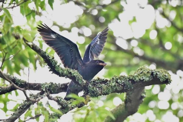 25幼鳥の羽ばたき