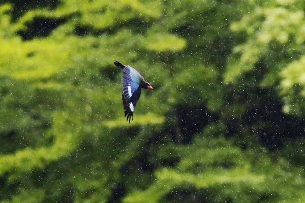 26翠雨の天龍に羽ばたく