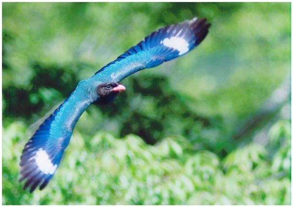 57青き狩人の飛翔