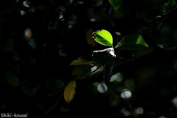 透過光&反射光