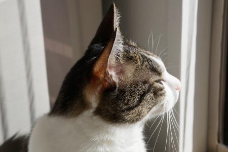 猫の3年、人の約12年分