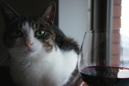 猫付き晩酌