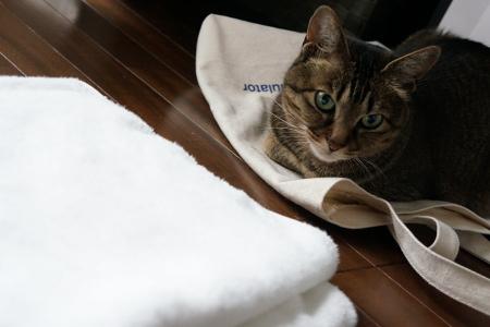 嫌われた白タオル