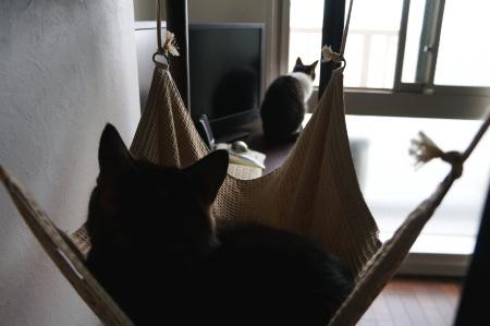 外を見る猫を見る猫