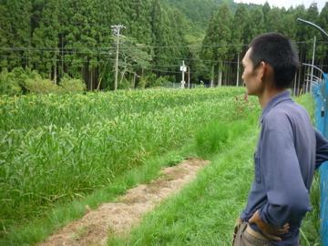 雑穀を眺める人