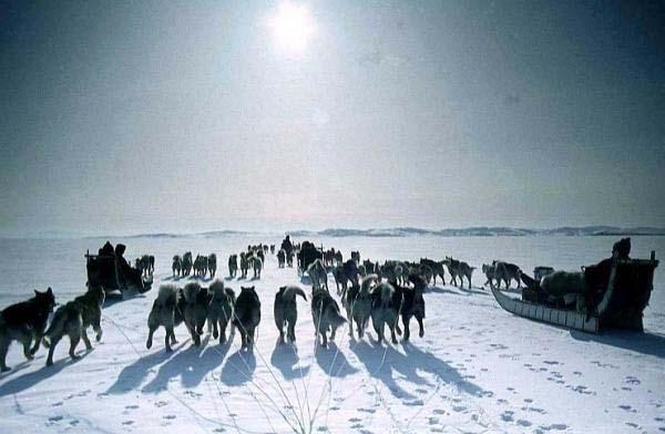 とある冬の犬そりと太陽image_convert_20140216155127