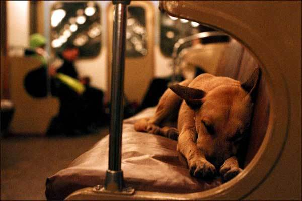 ソチ関連(メトロのなかの子犬)image