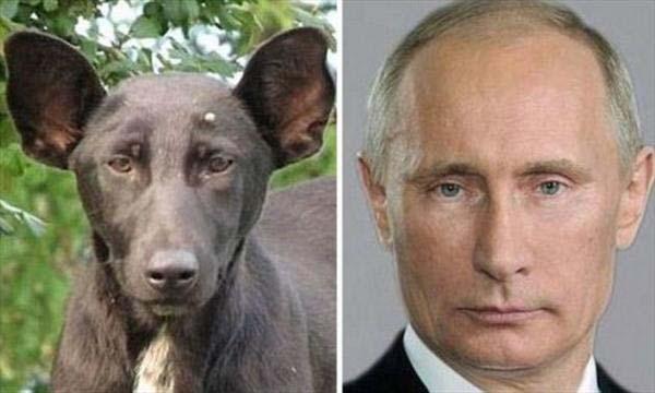 ソチ関連(プーチンさんとわんこ)image_convert_20140221003458