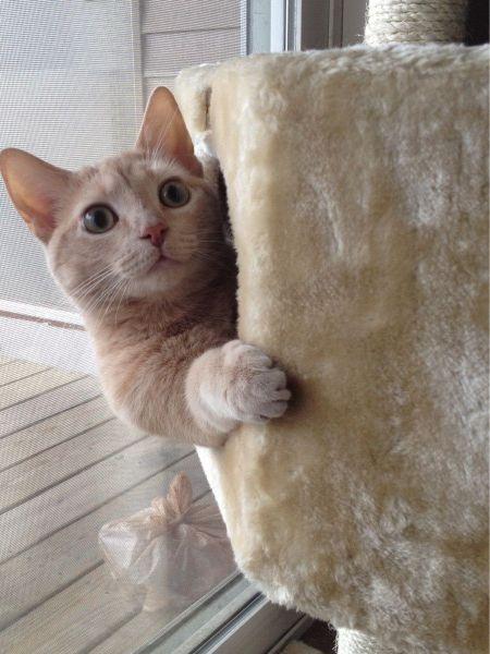 とあるネコさんののぞき見なimage