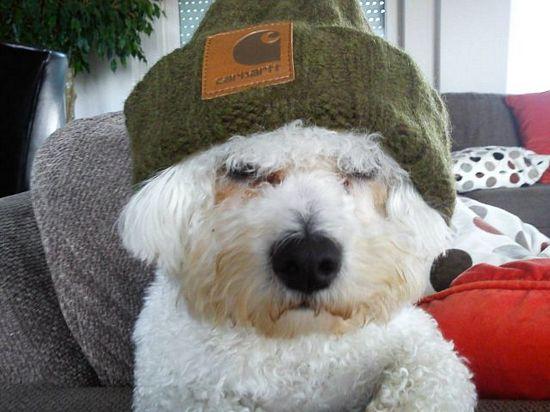 とある帽子犬image