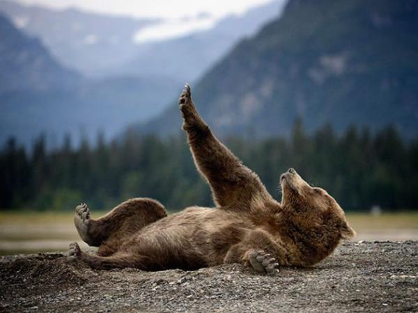 とあるクマさんの手かざしimage