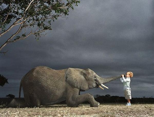 とある少年と象のimage