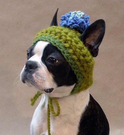 とある毛糸の帽子犬image