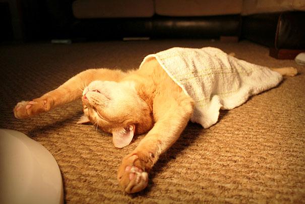 とある布団かけ眠りネコimage