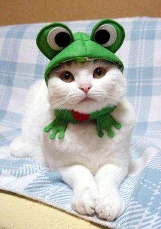 とある美系ネコさんimage