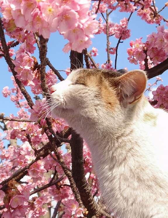 とあるネコさんの花見image
