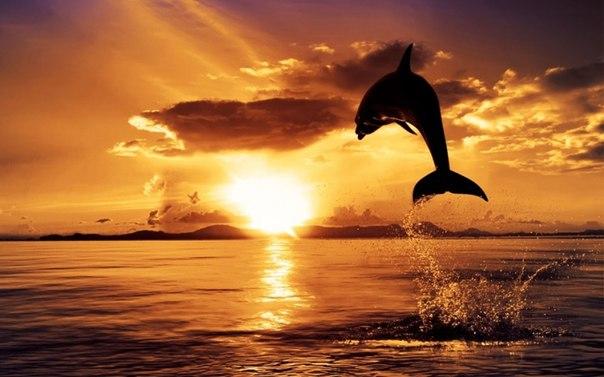 とあるイルカと太陽と海image