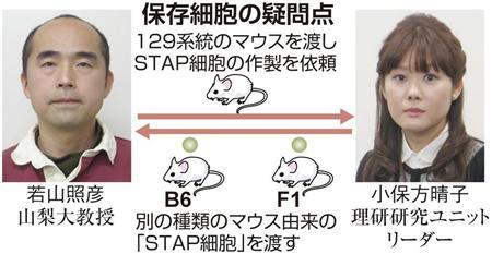 STAP(保存細胞の疑問点)image