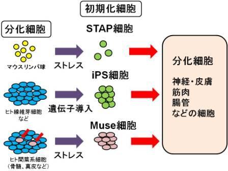 stap関連(比較)image