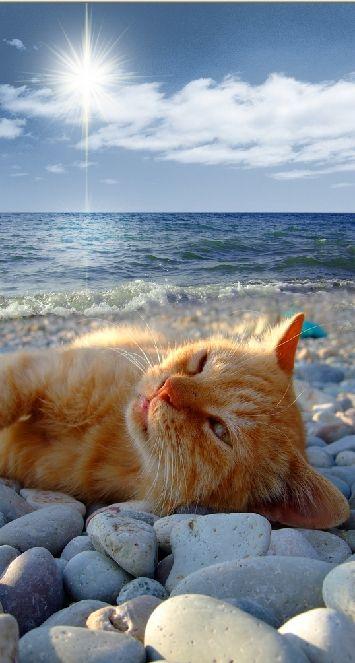 とある浜辺ネコimage